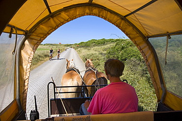 Horse-drawn carriage driving on Juist Island, car-free zone, East Frisian Islands, East Frisia, Lower Saxony, Germany, Europe