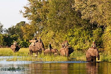 Elephant back safari, Abu Camp, Okavango Delta, Botswana, Africa