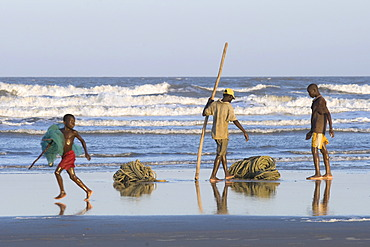 Fishermen are bundling up a fishing net, beach north of Quelimane, Mozambique, Africa