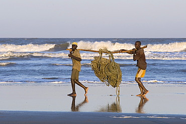 Fishermen carrying a heavy fishing net, beach north of Quelimane, Mozambique, Africa