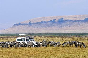 Tourists watching a herd of Zebras (Equus quagga burchelli) at close range in the Ngorongoro Crater, UNESCO World Heritage Site, Tanzania, Africa