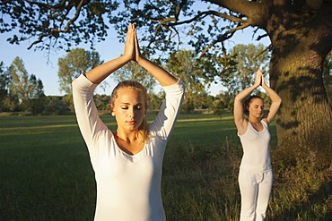 Two young women doing yoga exercises under a tree