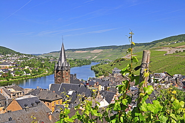 Vineyards in Bernkastel, parish church St. Michael, Bernkastel-Kues, Rhineland-Palatinate, Germany, Europe