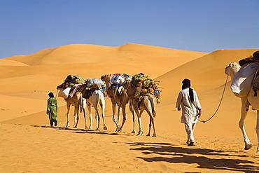 Camel caravan in the Libyan desert, Camels (Camelus dromedarius), Libya, Sahara, North Africa, Africa