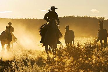 Cowboys horseriding at sunset, Oregon, USA