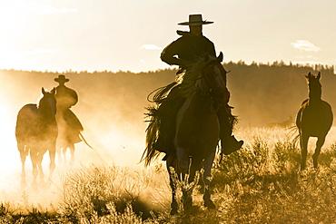Cowboy with horses, Oregon, USA