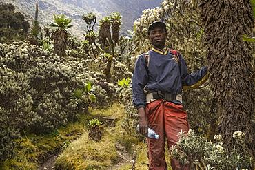 Hiking, trekking guide in the Rwenzori Mountains, Kasese, Uganda, Africa