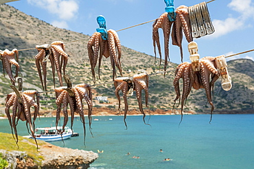 Octopuses hung up to dry on washing lines, Plaka beach, Crete, Greece, Europe