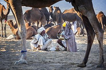 Two men having a drink, Pushkar Camel Fair, Pushkar, Rajasthan, India, Asia