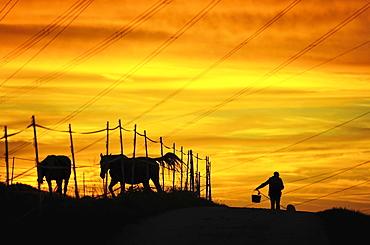 Man and dog next to paddock, evening light, silhouette, Singscheider Hohe, Essen-Kupferdreh, North Rhine-Westphalia, Germany, Europe