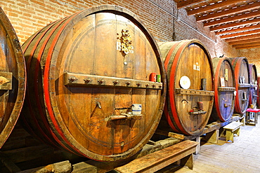 Barrels in cellar, Antica Cantina San't Amico winery,  Morro D'Alba, Marche, Italy, Europe