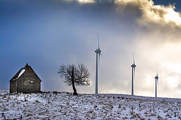 Wind turbines of the Cezallier windfarm, Puy de Dome department, Auvergne, France, Europe