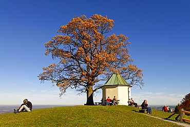 Chapel with view, Luitpoldeiche, oak tree, Torwang am Samerberg, Upper Bavaria, Bavaria, Germany, Europe