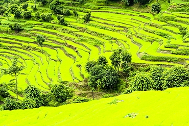 Agricultural landscape, green terrace rice fields, Upper Marsyangdi valley, Bahundanda, Lamjung District, Nepal, Asia
