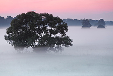 Early morning at sunrise, fog in the floodplains, Middle Elbe Biosphere Reserve, Saxony-Anhalt, Germany, Europe