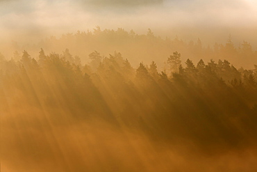 Rays of sunlight in morning fog, Saxon Switzerland National Park, Saxony, Germany, Europe