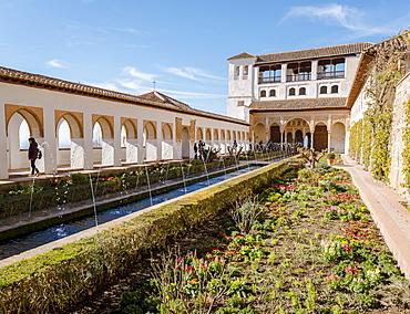 Garden with fountain, Patio de la Acequia, Gardens of the Generalife, Summer Palace Generalife, Palacio de Generalife, Granada, Andalusia, Spain, Europe