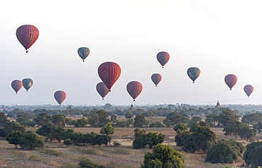 Hot-air Balloons in flight over temples, seen from Pyathada Paya, Bagan, Myanmar, Asia