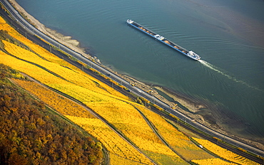 Vineyards in autumn, with cargo ship on the Rhine, Rhine Valley near Boppard, Rhineland-Palatinate, Germany, Europe