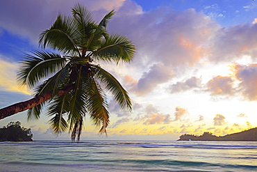 Overhanging coconut tree, sunset, Baie Lazare bay, Mahe, west coast, Seychelles, Africa
