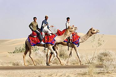 Camel riders travelling in the Thar Desert, Sam, near Jaisalmer, Rajasthan, India, Asia