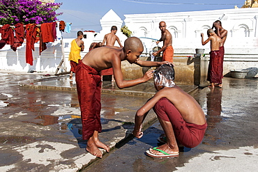 Novice monks during the morning bath with a shaving of the head in the Shwe Yaunghwe Kyaung Monastery, near Nyaungshwe, Shan State, Inle Lake, Myanmar, Asia