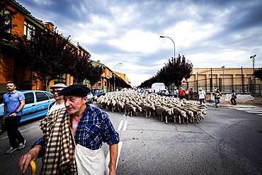 Large flock of sheep transits through the streets during the transhumance routes, city of Soria, Spain, Europe