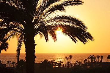 Palm trees by the sea at sunset, Playa de los Amadores, Gran Canaria, Canary Islands, Spain, Europe