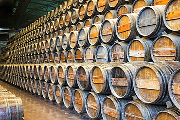 Wine barrels, Bacalhoa Winery, Azeitao, Setubal Peninsula, Portugal, Europe