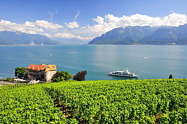 Views over the vineyards with Chateau de Glerolles and Lake Geneva towards the Swiss Rhone Valley, Saint-Saphorin, Lavaux, Canton of Vaud, Switzerland, Europe