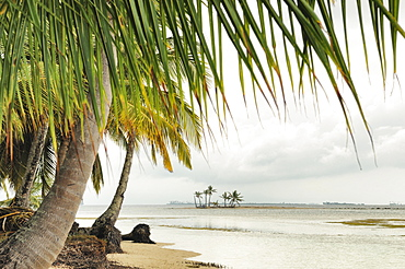 Lonely beach with palm trees, tropical island, Chichime Cays, San Blas Islands, Panama, Central America
