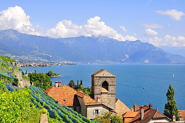 View over the wine-producing village and Lake Geneva towards Lausanne, Saint-Saphorin, Lavaux, Canton of Vaud, Switzerland, Europe