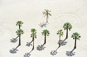 Palm trees on the beach, Playa de las Teresitas, Santa Cruz, Tenerife, Canary Islands, Spain, Europe