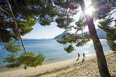 Pine trees and beach, Platja Formentor, Cap de Formentor, Pollenca, Majorca, Balearic Islands, Spain, Europe
