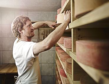 Dairyman storing his mountain cheese, Steinbergalm, Inneralpbach, Alpbach, Tyrol, Austria, Europe