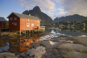 A typical red rorbuer house, rorbu, at the coast of the Norwegian Sea near Reine, mountains at back, island of Moskenesoy, Moskenesoy, Lofoten archipelago, Nordland, Norway, Europe