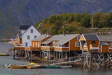 The yellow rorbuer huts, rorbu, of the tiny village Sakrisoy in the early morning, Sakrisoy, Sakrisoy, island of Moskenesoy, Moskenesoy, Lofoten archipelago, Reine, Nordland, Norway, Europe