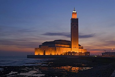 The floodlit Hassan II Mosque at the coast of the Atlantic Ocean at the blue hour in the morning, Casablanca, Morocco, Africa