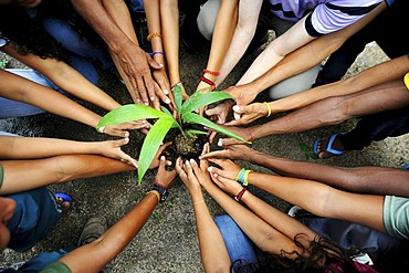 Hands and arms of young people, arranged radially around a seedling
