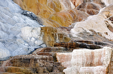 Palette Spring Terrace, Lower Terraces, limestone sinter terraces, geysers, hot springs, colourful thermophilic bacteria, Mammoth Hot Springs Terraces, Yellowstone National Park, Wyoming, United States of America
