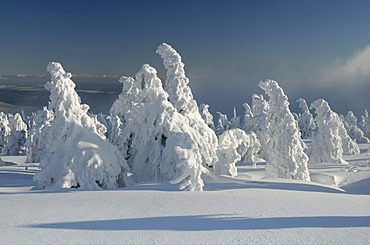 Snow-covered trees, winter landscape on Brocken mountain, Harz, Saxony-Anhalt, Germany, Europe