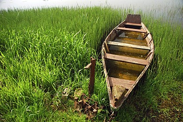 Boat in the reeds by the lakeside, Mueritz National Park, Brandenburg, Germany, Europe