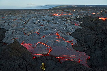 Molten pahoehoe type lava flowing from a crack in the East Rift Zone towards the sea, lava field of the Kilauea shield volcano, Hawai'i Volcanoes National Park, Kalapana, Hawai'i, USA