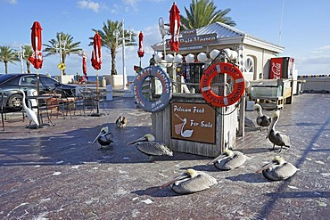 Feeding pelicans for payment, The Pier, Saint Petersburg, Florida, United States, USA