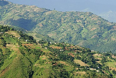 Rice terraces, hilly landscape, highland near Nagarkot, Bhaktapur, Kathmandu Valley, Nepal, Asia