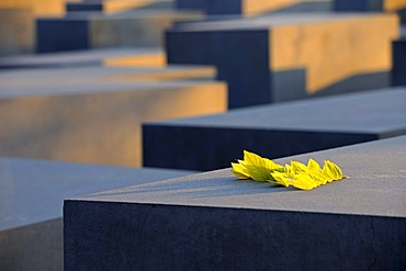 Concrete pillars of the Holocaust Memorial at sunrise, Memorial to the Murdered Jews of Europe, architect Peter Eisenman, Tiergarten district, Mitte, Berlin, Germany, Europe