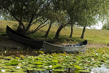 Danube Delta, Romania, Europe