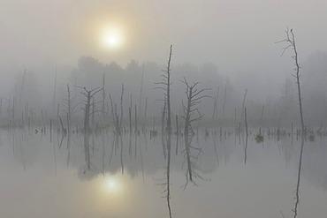 Schwenninger Moos nature reserve, fog, Neckar river head, Villingen-Schwenningen, Black Forest, Baden-Wuerttemberg, Germany, Europe