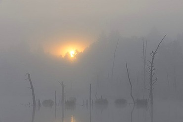 Schwenninger Moos nature reserve in fog, source of the Neckar, Villingen-Schwenningen, Black Forest, Baden-Wuerttemberg, Germany, Europe