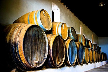 Wine barrels in Museum of Wine in La Geria, where wine is grown in full volcanic ash, a production that is unique in the world, Lanzarote, Canary Islands, Spain, Europe
